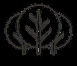 Akademie für Waldbaden und Gesundheit